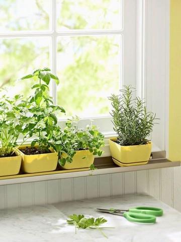Огород на кухне: примеры, которые обязательно надо увидеть 2