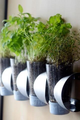 Огород на кухне: примеры, которые обязательно надо увидеть 4