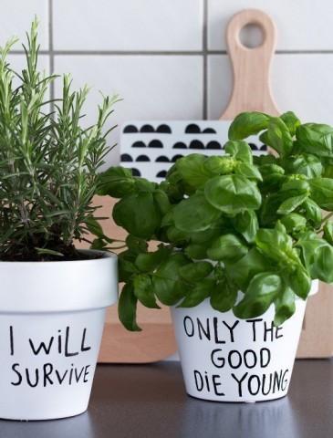 Огород на кухне: примеры, которые обязательно надо увидеть 13