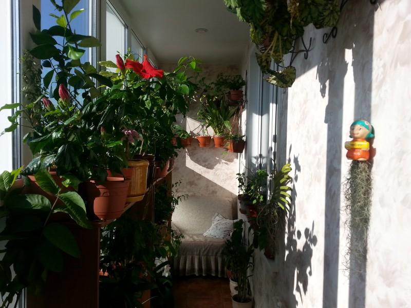 Растения, которые можно держать зимой на балконе - наш дом и.