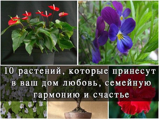 10 растений, которые принесут в Ваш дом любовь. 0