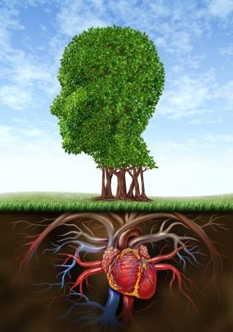 Как мозг и жизнь можно изменить в любом возрасте 0