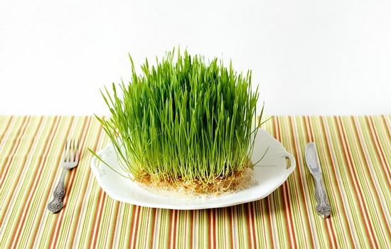 Как прорастить пшеницу - Полезные советы