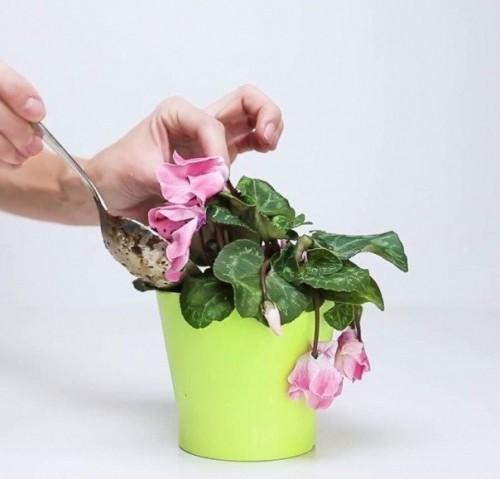 3 ингредиента, которые вернут жизнь любимому растению! 0