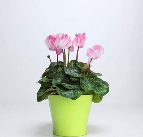 3 ингредиента, которые вернут жизнь любимому растению! 1