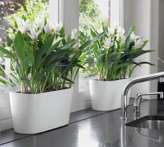 Еще один совет по поливу комнатных растений! 0