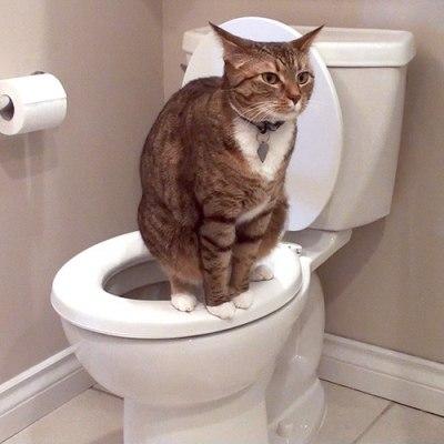 Дезодорант для кошачьего туалета