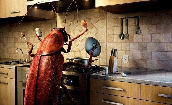 Как бороться с бытовыми насекомыми