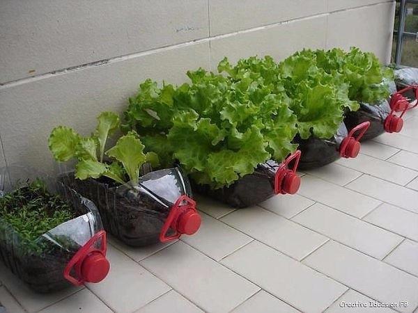 Клумбы для выращивания зелени из пятилитровых пластиковых бутылок