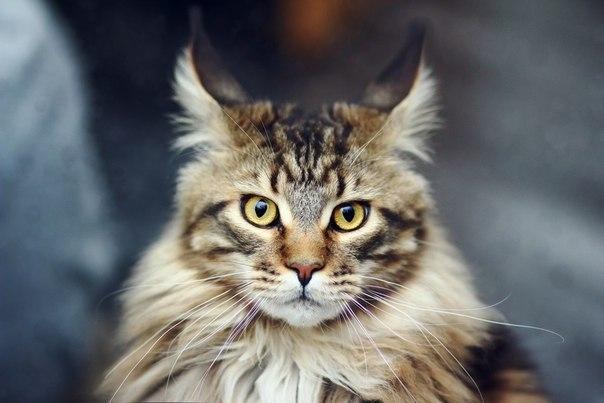 Какую пользу может принести кот