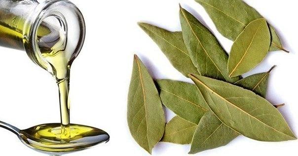 Невероятные свойства лаврового масла.