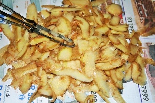Картофельные очистки - лучшее удобрение для смородины