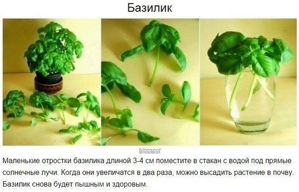 8 овощей, которые можно купить один раз, а потом выращивать всегда 0
