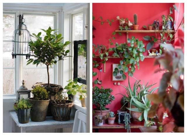 Бохо-стиль: как украсить дом с помощью растений 9