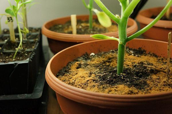 Корица для комнатных растений 0