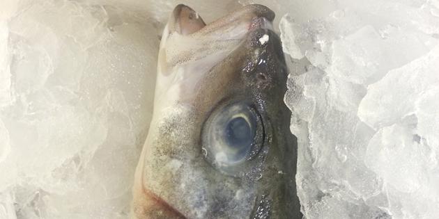 Как выбирать рыбу и морепродукты — Полезные советы
