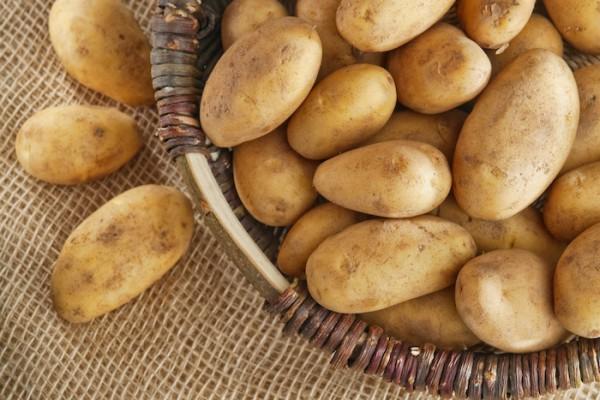 как сохранить картошку на даче