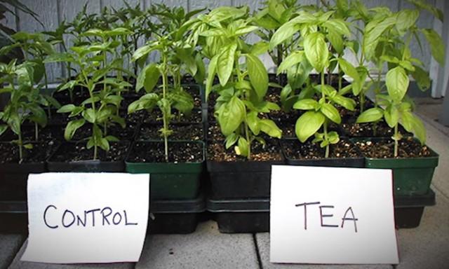 Как подкормить растения? 0