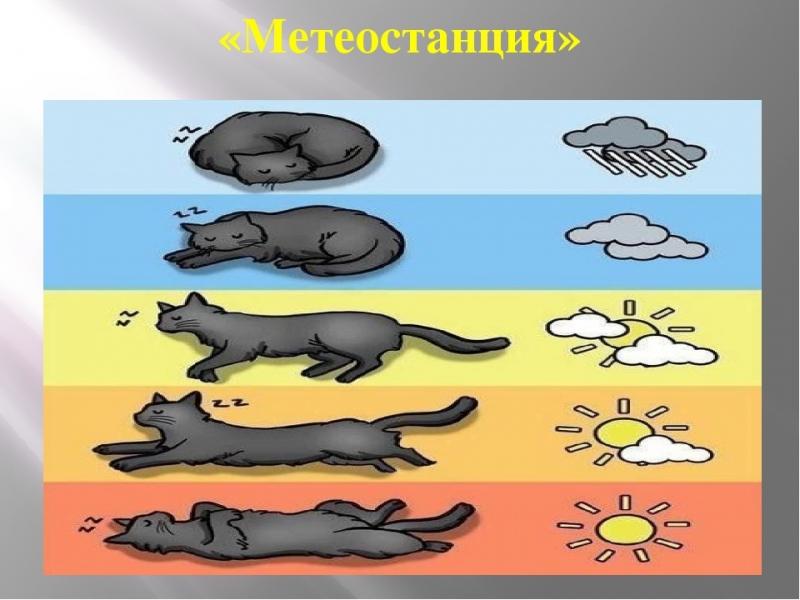 Как определить погоду по поведению кошки 0