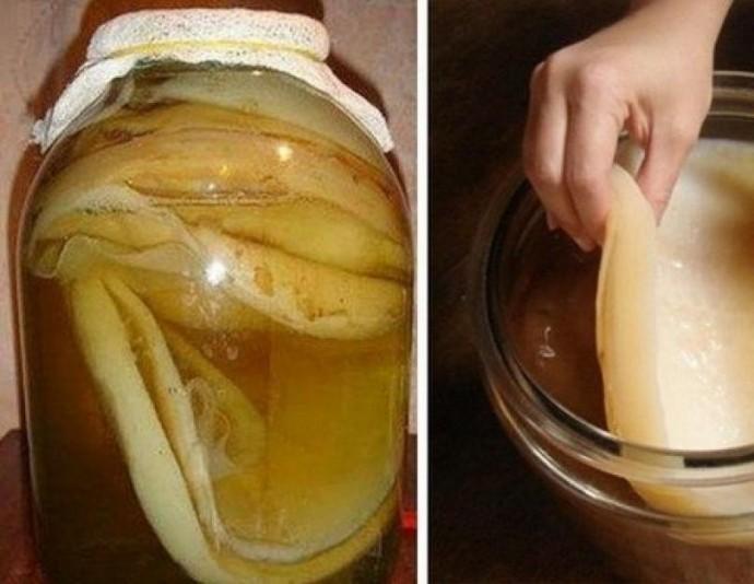Как вырастить чайный гриб самостоятельно из чая и из шиповника 0