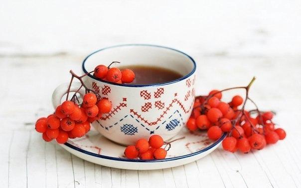 Витаминный чай с рябиной для кишечника, для почек и от гриппа 0