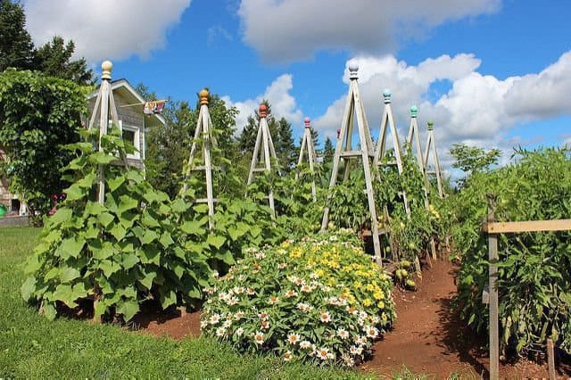 Строим пирамиду для лучшего урожая огурцов 0
