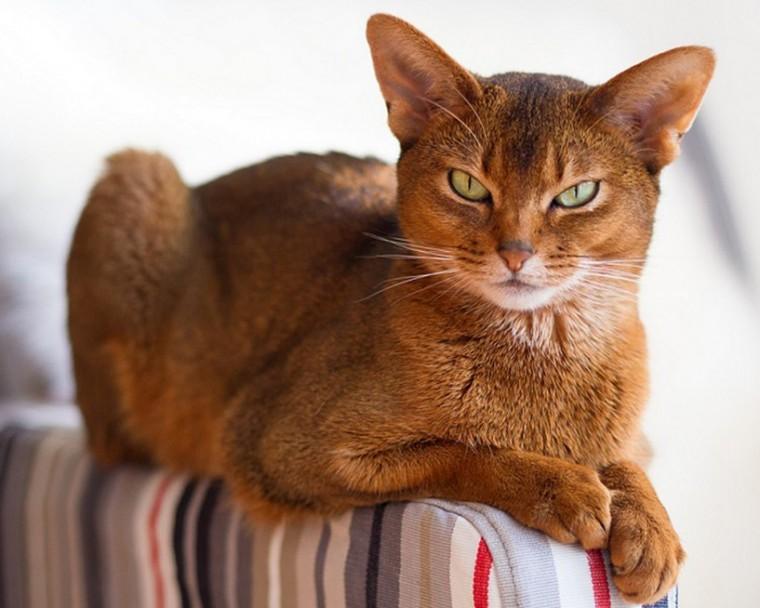Как выводить кошачью мочу с мебели и обуви 0
