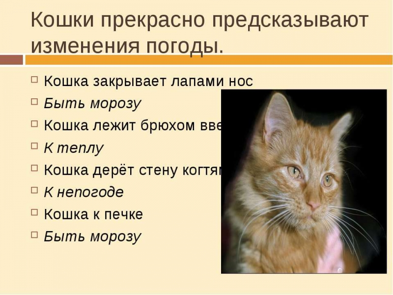 Как определить погоду по поведению кошки 1