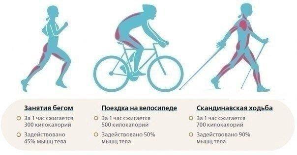 Сравнение пользы от бега, езды на велосипеде и скандинавской ходьбы 0