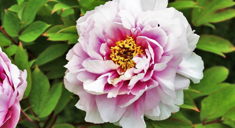 Какие выбрать самые ароматные цветы 0