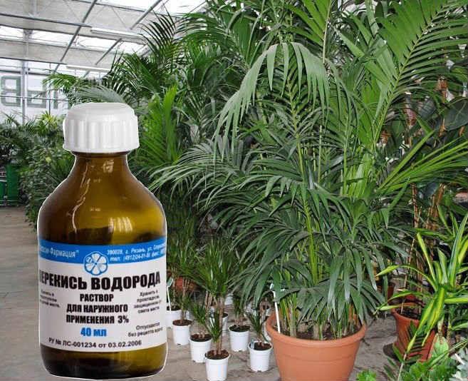 Зачем поливать растения перекисью водорода 0