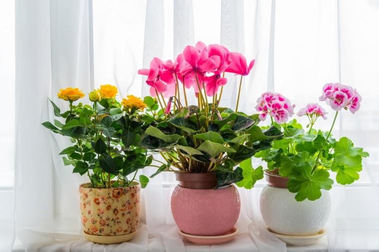 Пять лучших средств для цветения комнатных растений 0
