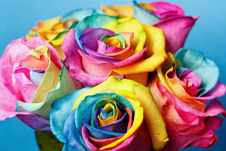 Как превратить белую розу в радужную 0