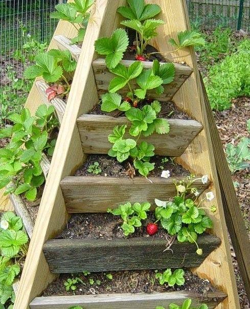 Вертикальный способ выращивания клубники 3