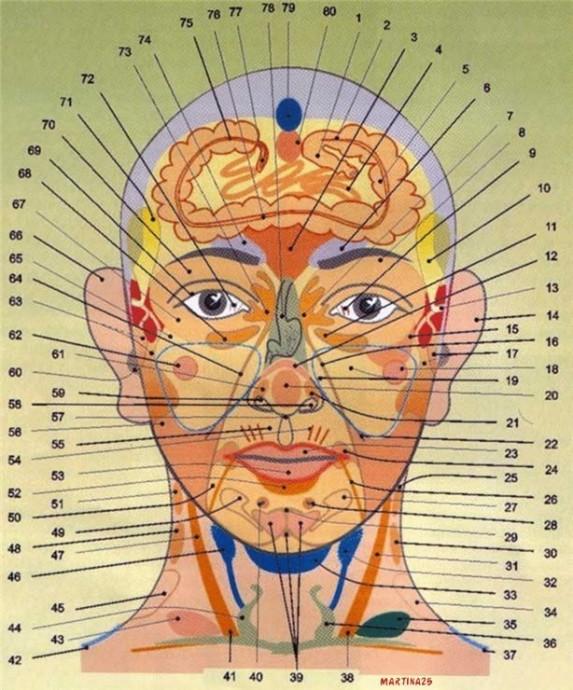 Диагностика здоровья по лицу и шее 0