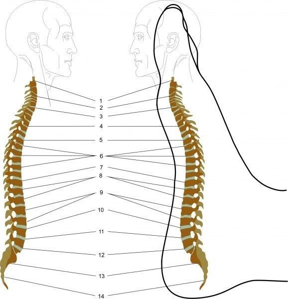Как сделать массаж стоп, способствующий снятию болей в спине 0
