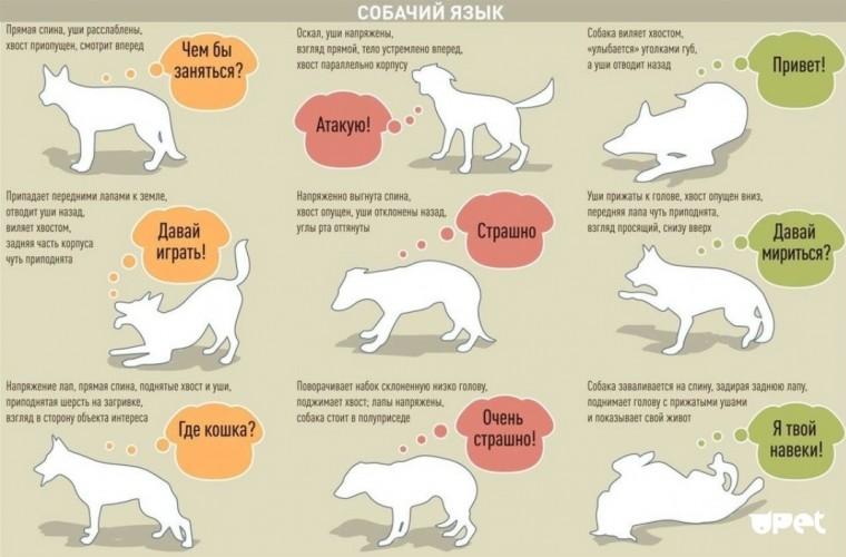 Как понять собачий язык без переводчика 0