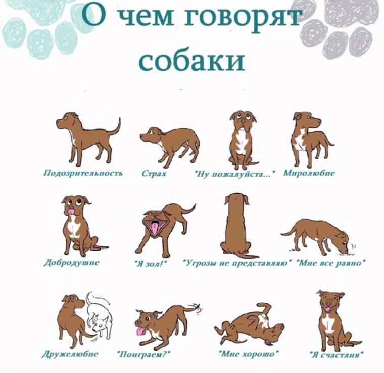 Как понять собачий язык без переводчика 2