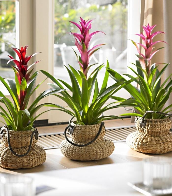 9 секретов для быстрого роста домашних растений 0