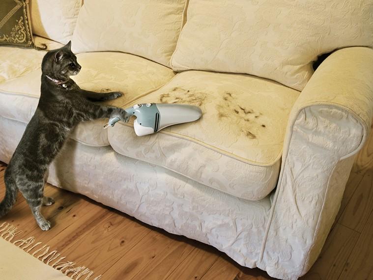 Отличные способы проверенного избавления от кошачьих меток 0