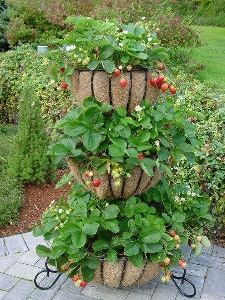 Вертикальный способ выращивания клубники 2