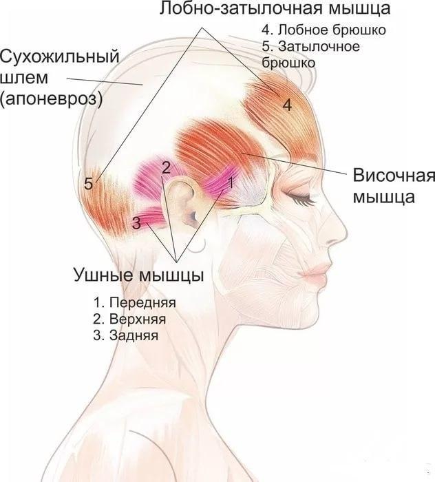 """Упражнение """"Шлем"""": эффективная подтяжка лица без скальпеля 1"""