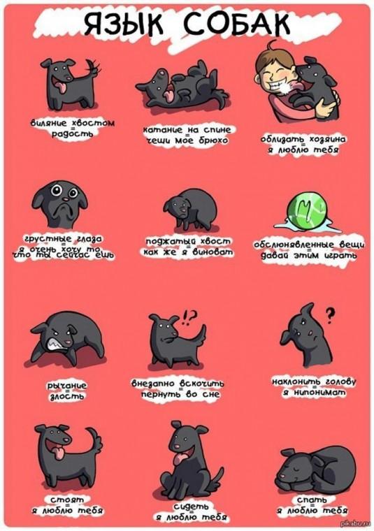 Как понять собачий язык без переводчика 5