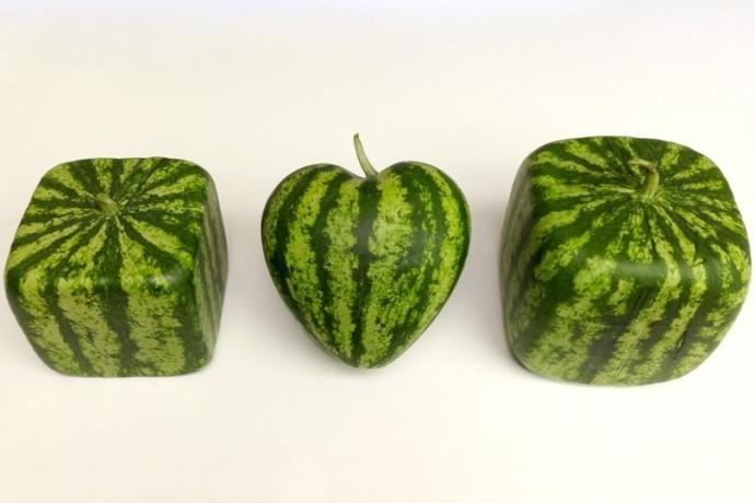Как запрограммировать форму урожая нового года 1
