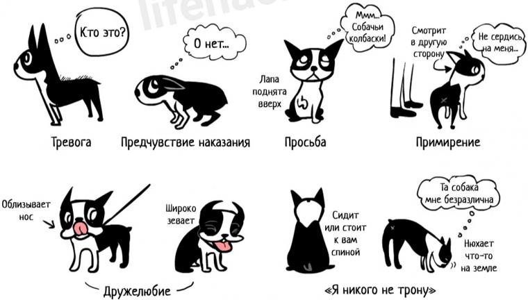 Как понять собачий язык без переводчика 4