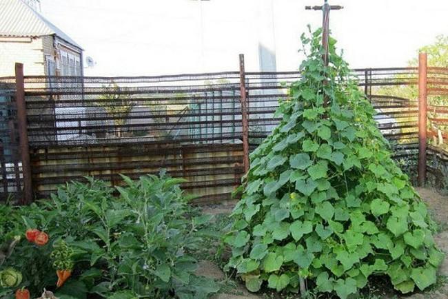 Строим пирамиду для лучшего урожая огурцов 1
