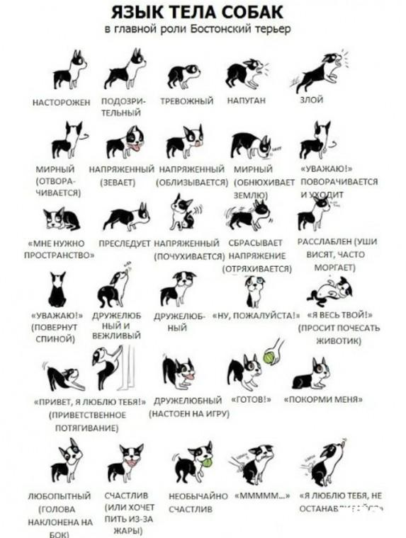 Как понять собачий язык без переводчика 3