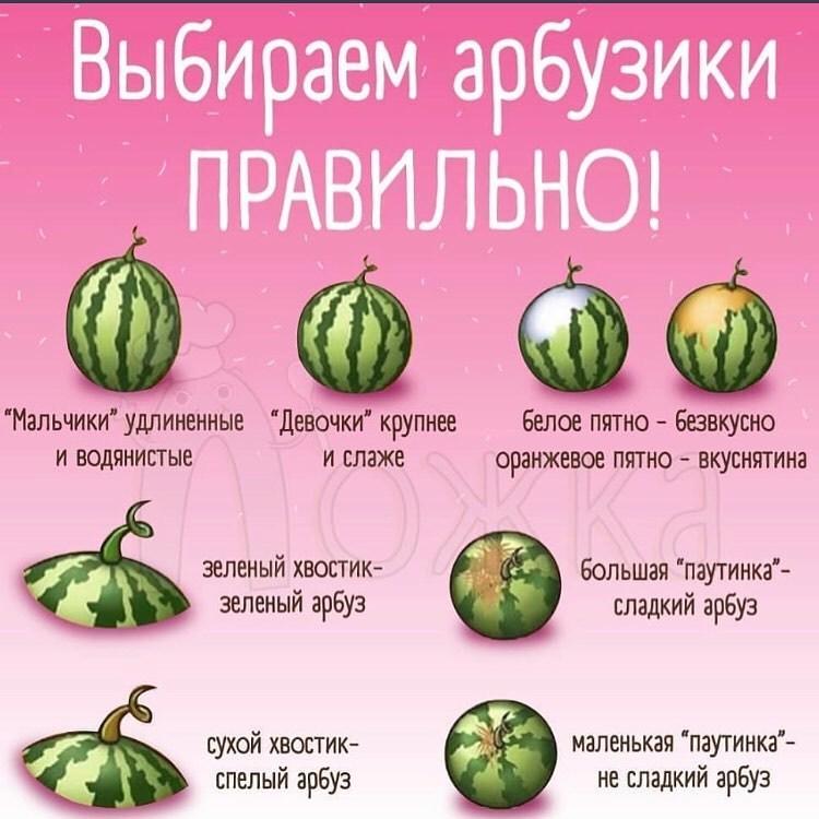 Как выбрать хороший арбуз: готовимся к арбузному сезону 2