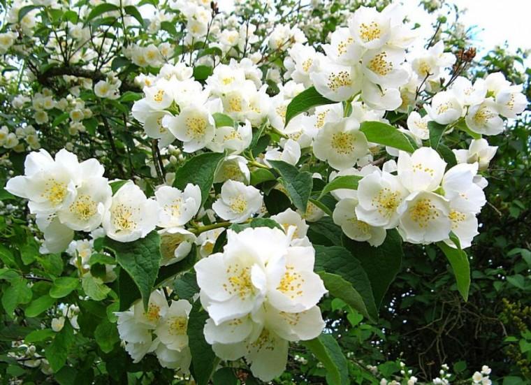 Природные ароматы, которые меняют настроение 1