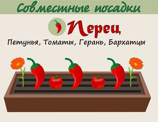 Взаимовыгодное соседство овощей 6